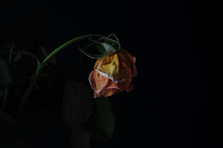 Rob Love, Photography, Melbourne Australia. Photo of Flower.