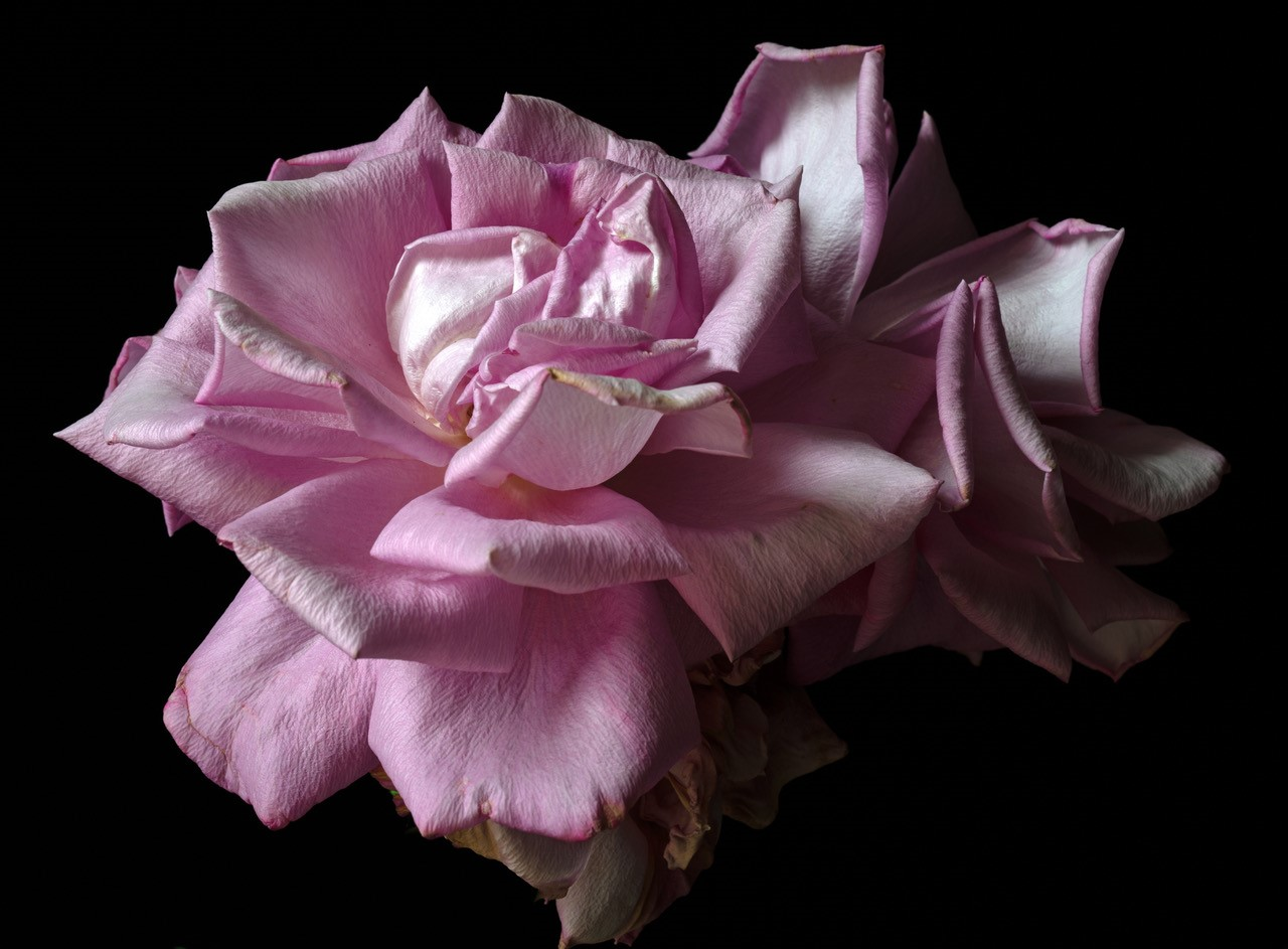 Rob Love Photography, Exhibitions, Melbourne. Flowers, Photographic art exhibition